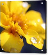 Flower Droplets Acrylic Print