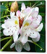 Flower Du Jour Acrylic Print