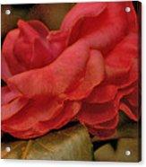 Flower Dusting Acrylic Print
