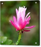 Flower Edition Acrylic Print