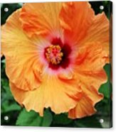 Flower Explosion2 Acrylic Print