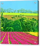 Flower Farm And Hills Acrylic Print