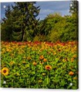 Flower Farm Acrylic Print
