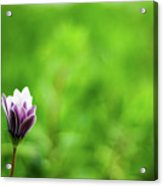 Flower Front Of Blur Background. Acrylic Print
