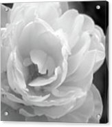 Flower Ghost Acrylic Print