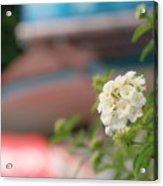 Flower Grow Acrylic Print