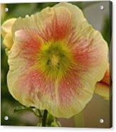 Flower Head Acrylic Print