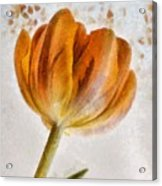 Flower - Id 16235-142750-0708 Acrylic Print