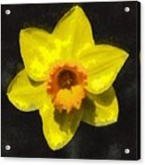 Flower - Id 16235-220300-0389 Acrylic Print