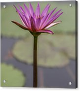 Flower In A Pond Acrylic Print