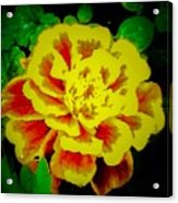 Flower In Abstract With Black Background Acrylic Print