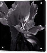 Flower In Monotone Acrylic Print