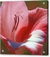 Flower In Pink Pastel Acrylic Print