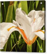 Flower In The Grass Acrylic Print