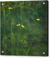 Flower In The Stream - Digital Art Acrylic Print