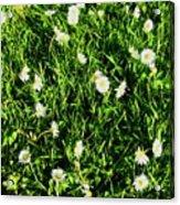 Flower Kissed Fields Acrylic Print