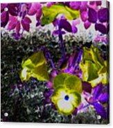 Flower Like Purple And Yellow Acrylic Print