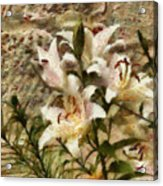 Flower - Lily - White Lily Acrylic Print