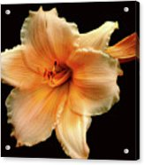 Flower Acrylic Print by M Montoya Alicea