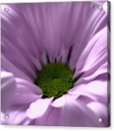 Flower Macro Beauty 3 Acrylic Print