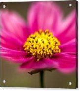 Flower Macro Acrylic Print