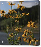 Flower Mountain View Acrylic Print