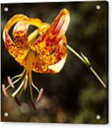 Flower Of Beauty Acrylic Print