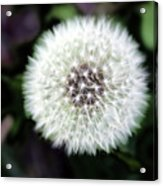 Flower Of Flash Acrylic Print