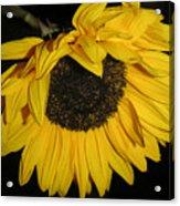 Flower Of The Sun Too Acrylic Print