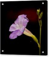 Flower On The Vine Acrylic Print