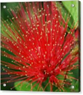 Flower Optics 3 Acrylic Print