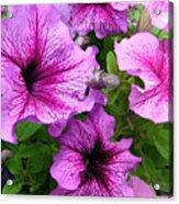 Flower Overload Acrylic Print
