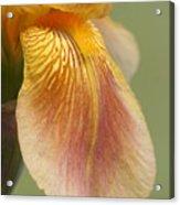Flower Parts 2 Acrylic Print