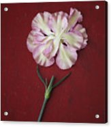 Flower Petals And Broken Stem Acrylic Print