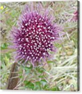 Flower Photograph Acrylic Print