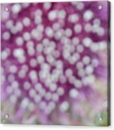 Flower Photograph2  Acrylic Print