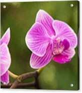 Flower - Pink Orchids Acrylic Print