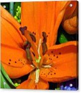 Flower Pistil Acrylic Print
