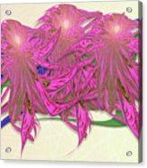 Flower Plant Acrylic Print