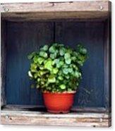 Flower Pot In A Window Acrylic Print