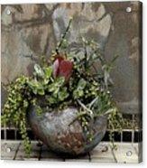 Flower Pot Acrylic Print by Viktor Savchenko