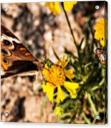 Flower Power Bug And Butterfly Acrylic Print