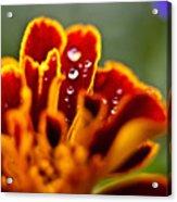 Flower Rain Drops Acrylic Print