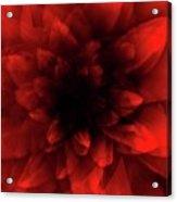 Flower  Red Shade Acrylic Print