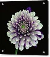Flower Rhythm 1 Acrylic Print