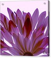 Flower Rise- Lavender Acrylic Print