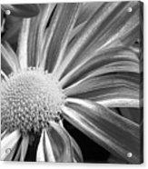 Flower Run Through It Black And White Acrylic Print