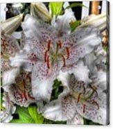 Flower Shop Lillies Acrylic Print