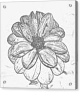 Flower Sketch Acrylic Print