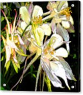 Flower St Acrylic Print